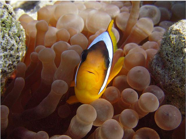 Unterwasserwelt in El Gouna